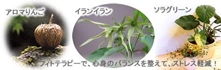 aromaJPEG21K.jpg