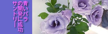 サントリー開発の青いバラ