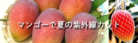 完熟マンゴー