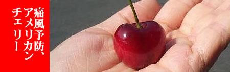american-cherryJPEG15K
