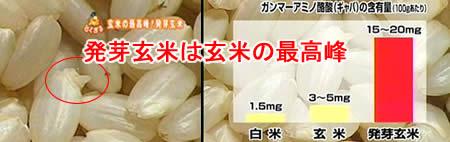 発芽玄米ギャバ