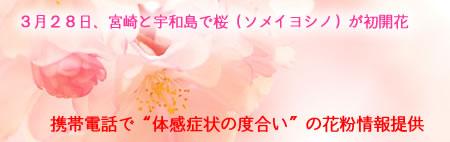 桜開花&花粉症情報
