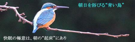 快適睡眠へ青い鳥