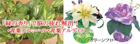 脳の疲労解消「緑の香り」
