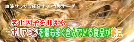 natto-poliaminJPEG19K