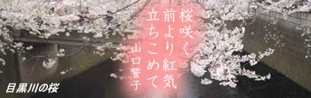 meguro-sakuraJPEG21K.jpg