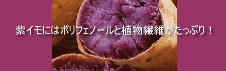 紫イモ・アヤムラサキ