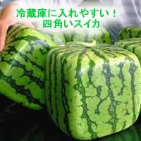 200875watermelonjpeg10k