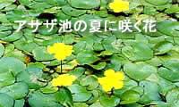 20081019oyamdaasaza3jpeg9k