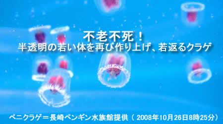 20081027benikuragejpeg19k