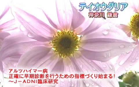 20081129arutsujpeg22k_2
