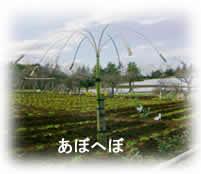 2009117komorebi3jpeg5k