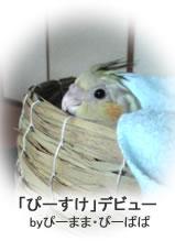 2009123petblog5jpeg8k