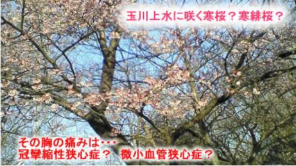 2009222kanzakurajpeg35k