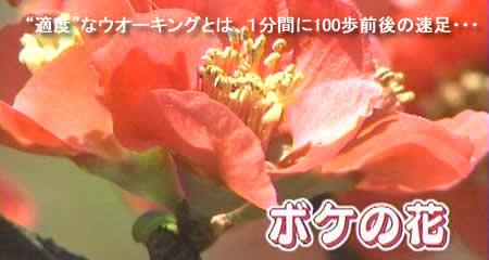 2009330bokejpeg19k