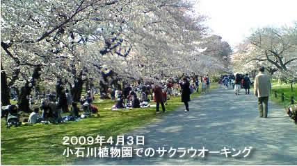 200943sakura1jpeg25k