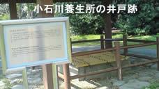 200943sakura2jpeg8k