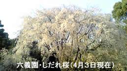 200943sakura2jpeg9k