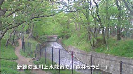2009417tamagawajpeg20k