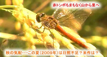 2009825autumnjpeg18k