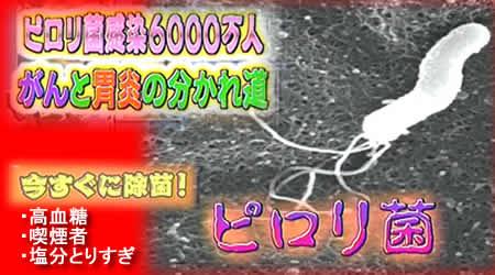 2010128pylorijpeg26k