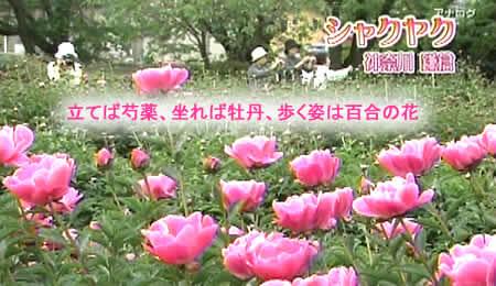 201058shakuyakujpeg28k