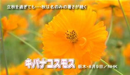 2010810kibanajpeg19k