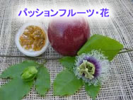 2010923fruits2jpeg10k