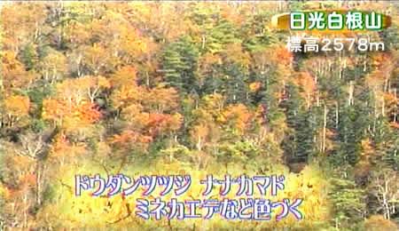 20101018koyojpeg28k_2