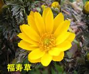 20101224fukujyuso3jpeg8k_2