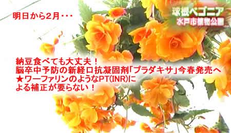 2011131natojpeg28k