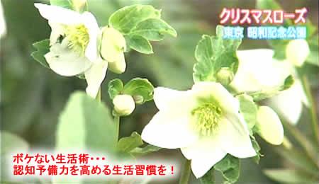 201129yobiryokujpeg19k