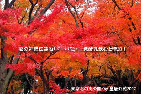 2011124koyojpeg36k