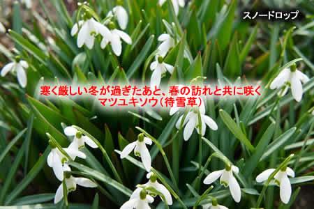 20111230matsuyukisoujpeg28k