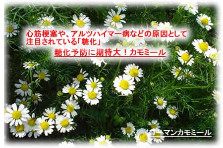 2012220kamomirujpeg33k