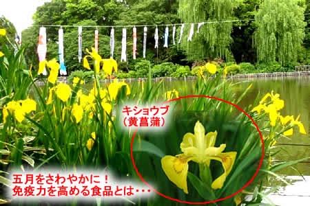 2012511kishobujpeg36k_2