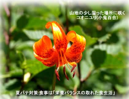 2012720kooniyurijpeg19k