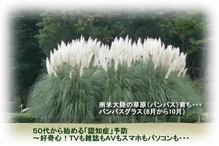 201294pampasgrassjpeg17k