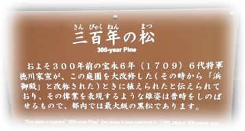 20121221hamarikyupinejpeg12k
