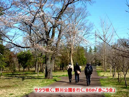 2013323nogawasakurajpeg42k